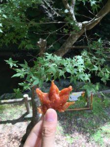 tempura - foglia di acero